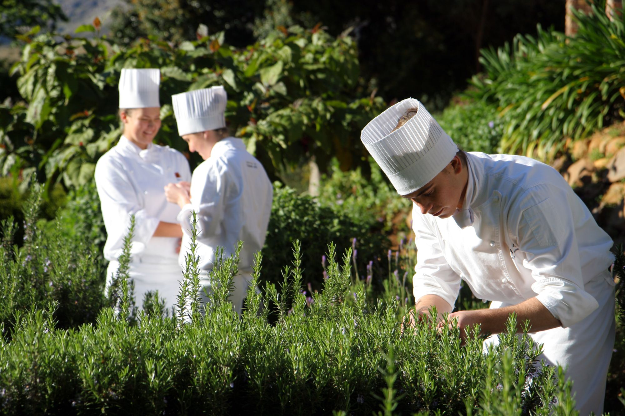 ICA CHEF Herbs - ICA Chef School